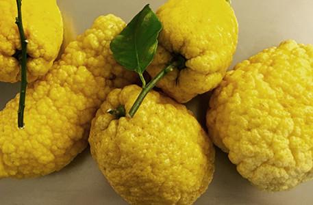 Moko-limoncello-cedri